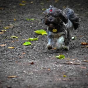 Matilda Enjoying A Free Run