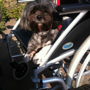 Matilda Thinks This Wheelchair Makes A Comfy Place To Settle On