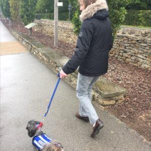 Matilda Having A Walk At Harlow Car Gardens