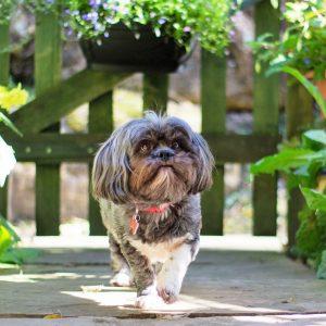 Taking Herself For A Walk Around The Garden